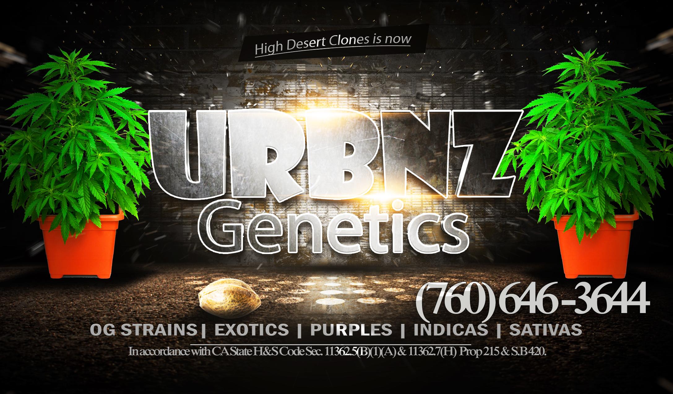 urbnz-card